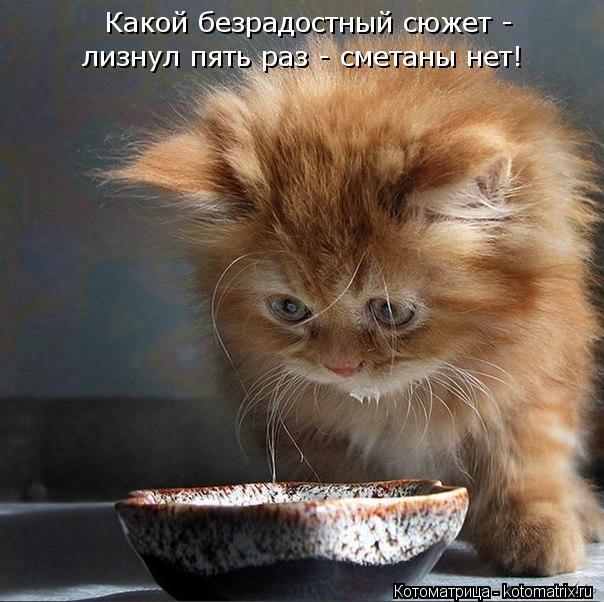 kotomatritsa_46 (604x602, 68Kb)