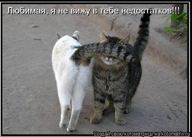 kotomatritsa_h (624x447, 53Kb)