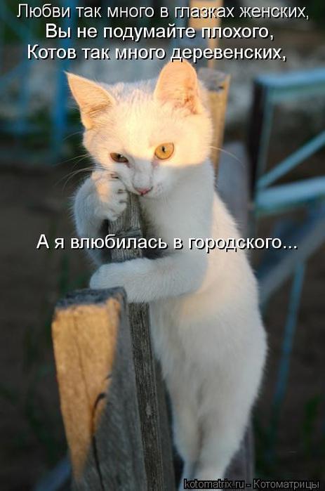 kotomatritsa_Jz (463x700, 41Kb)