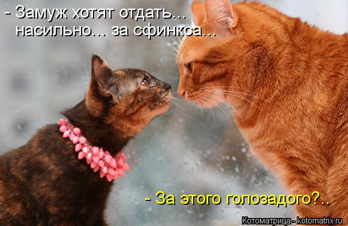 kotomatritsa_lB (692x449, 60Kb)