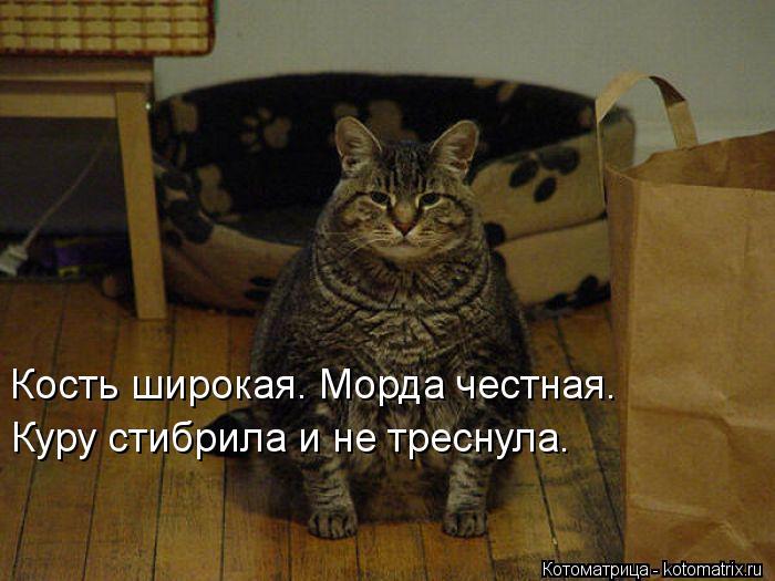 kotomatritsa_MO (700x525, 55Kb)