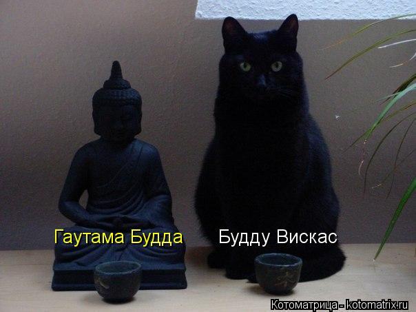 kotomatritsa_W (604x453, 35Kb)