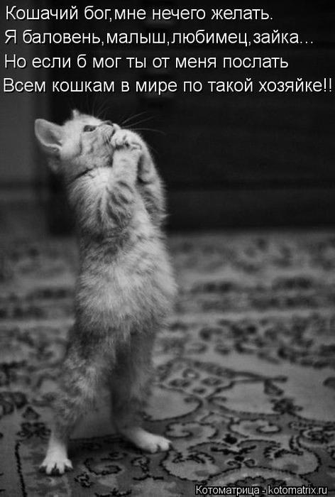 kotomatritsa_ZF (472x700, 46Kb)
