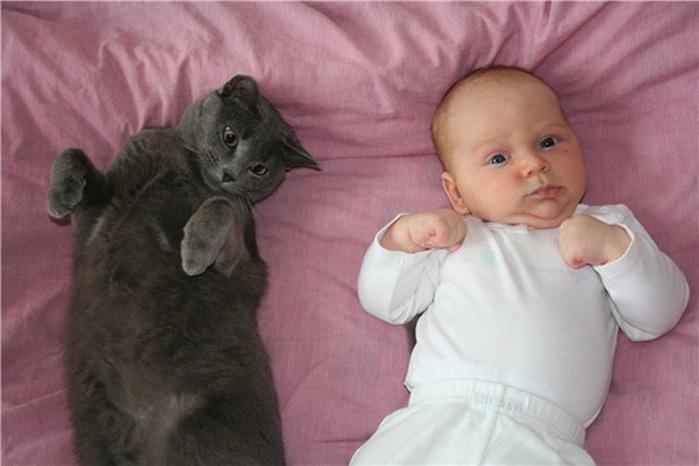Многие родители задумываются над вопросом, стоит ли заводить кошку, когда в