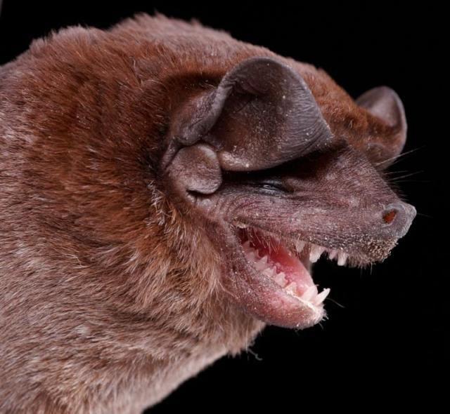 bats_01 (640x590, 62Kb)