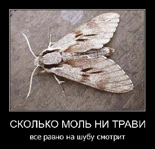 4497432_mol_3_jpg_png (319x308, 75Kb)