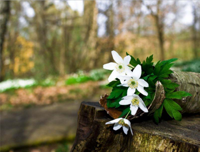Весенний лес на рабочий стол обои