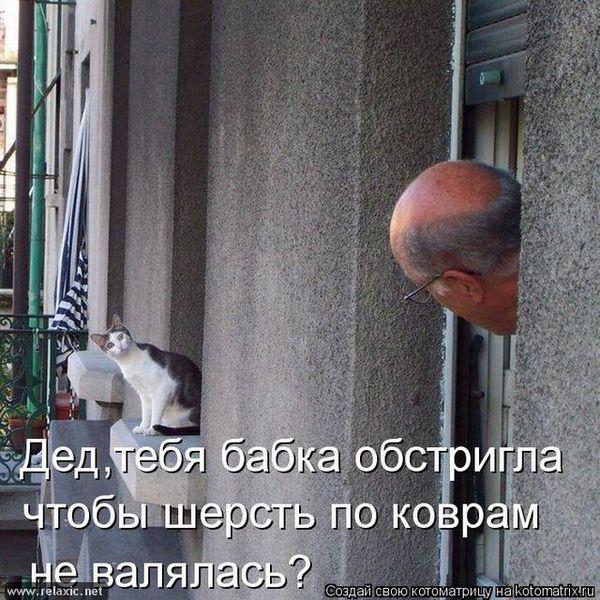kotomatrix_000461 (600x600, 94Kb)