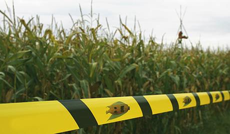 ГМО (460x268, 75Kb)