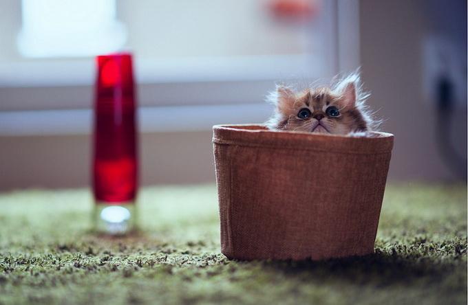 Самый очаровательный котенок в мире2 (680x444, 78Kb)