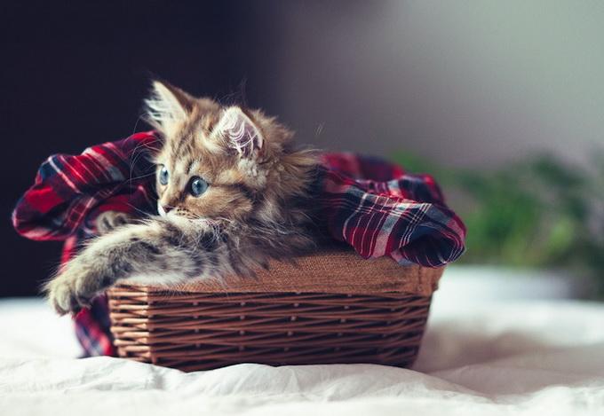 Самый очаровательный котенок в мире4 (680x469, 93Kb)