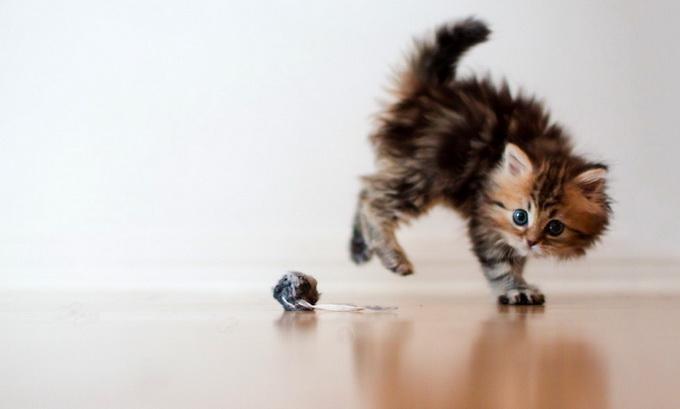 Самый очаровательный котенок в мире6 (680x409, 48Kb)