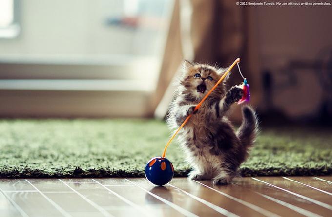 Самый очаровательный котенок в мире10 (680x446, 100Kb)