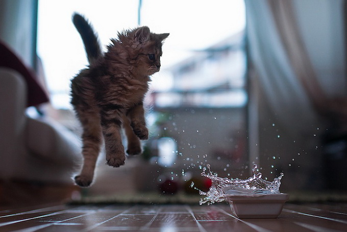 Самый очаровательный котенок в мире12 (680x454, 91Kb)