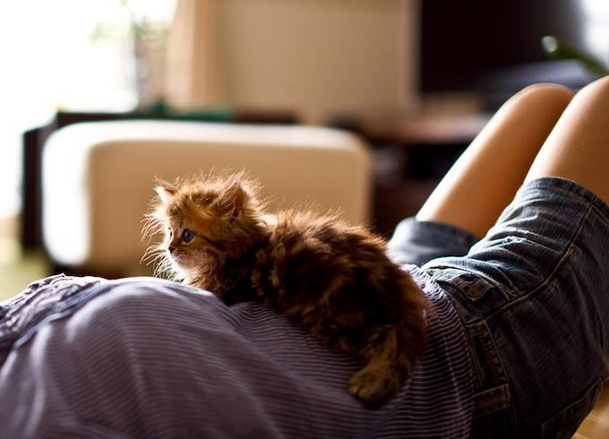 Самый очаровательный котенок в мире14 (680x490, 105Kb)