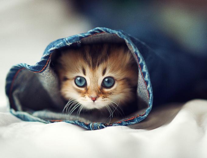 Самый очаровательный котенок в мире16 (680x519, 95Kb)