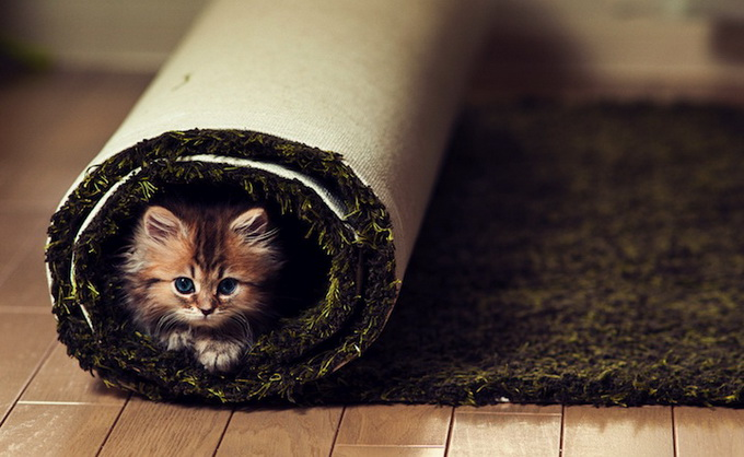 Самый очаровательный котенок в мире18 (680x418, 97Kb)