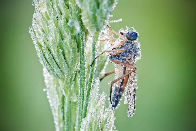 макрасъемка насекомых фото 2 (680x454, 482Kb)