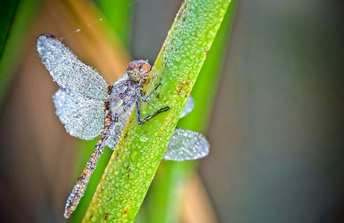 макрасъемка насекомых фото 4 (680x440, 95Kb)