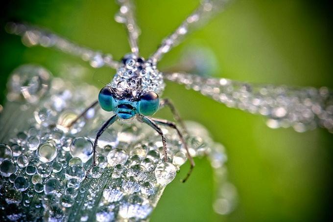 макрасъемка насекомых фото 6 (680x454, 108Kb)