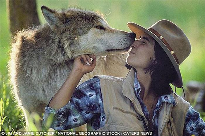 Супруги шесть лет жили с волчьей стаей