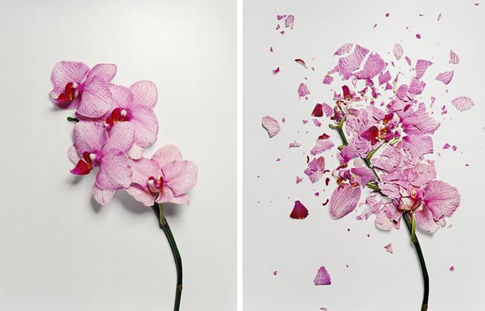 Разбитые цветы1 (680x437, 91Kb)