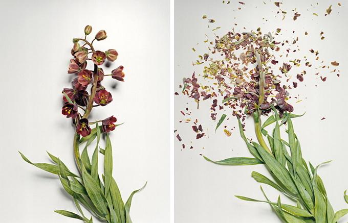 Разбитые цветы3 (680x437, 114Kb)
