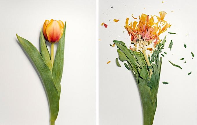 Разбитые цветы5 (680x433, 84Kb)