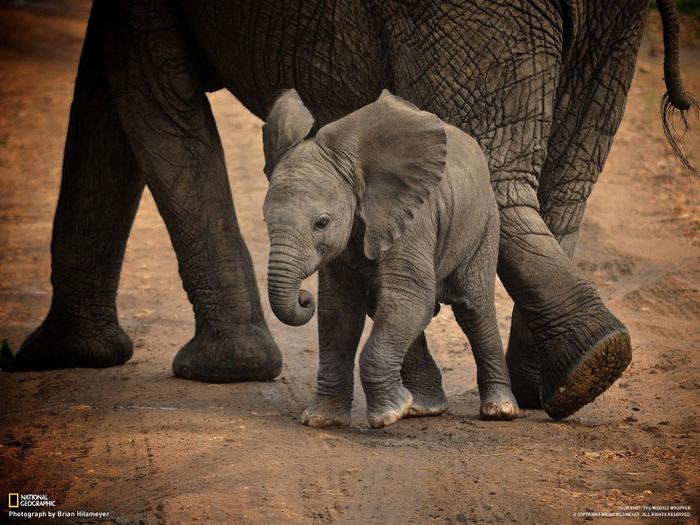 животные в фотографиях National Geographic (700x525, 165Kb)