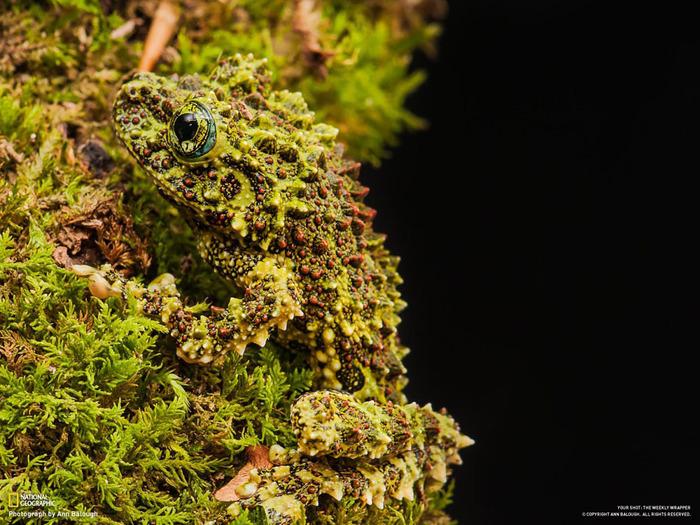 животные в фотографиях National Geographic 6 (700x525, 178Kb)