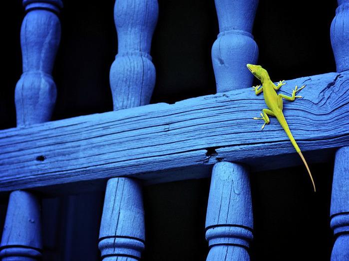животные в фотографиях National Geographic 12 (700x524, 126Kb)