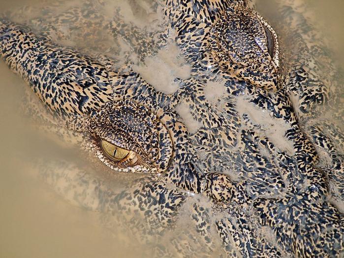животные в фотографиях National Geographic 13 (700x524, 215Kb)