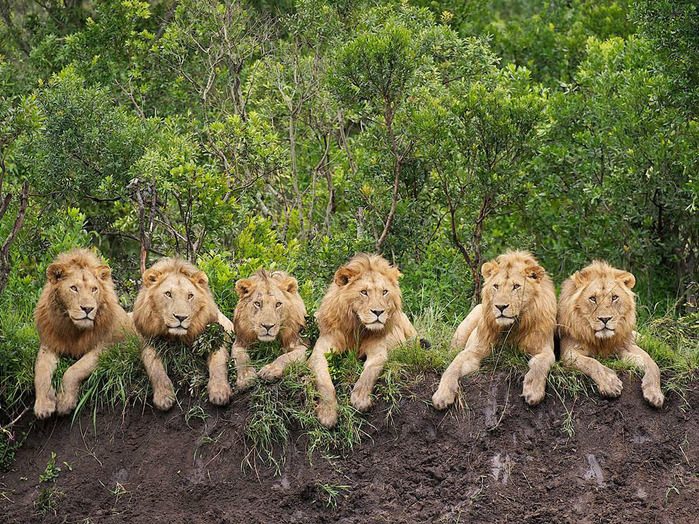 животные в фотографиях National Geographic 14 (700x524, 264Kb)