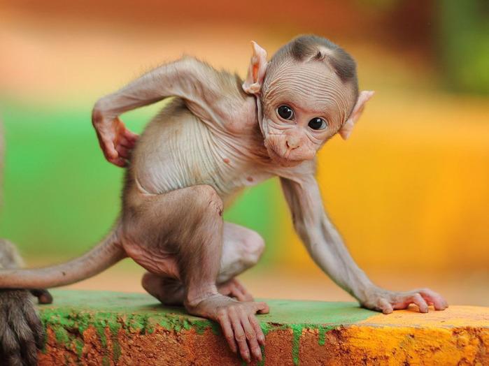 животные в фотографиях National Geographic 18 (700x524, 105Kb)