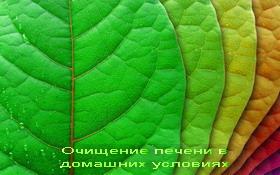 Kak-ochistit_pechen_v-_domashnih_usloviyah (280x175, 22Kb)