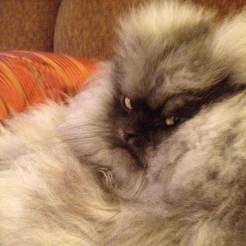 Самый злобный в мире кот. Фотографии