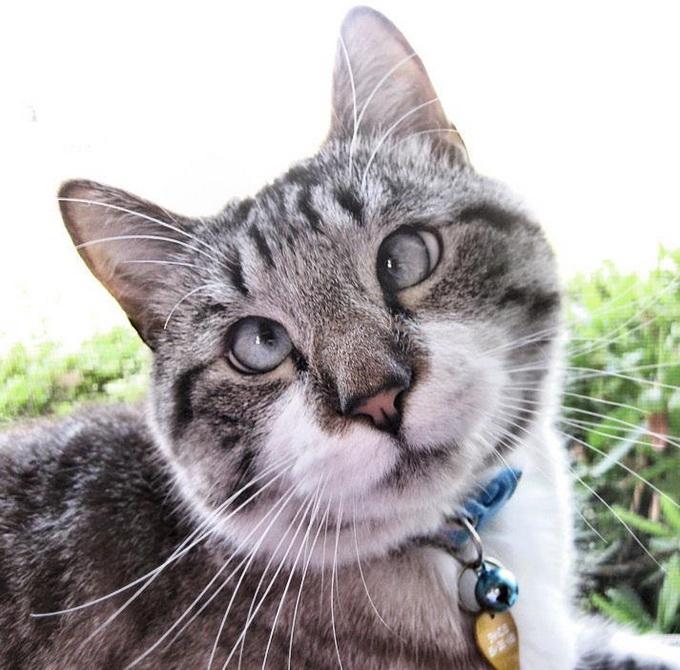 косоглазый кот фото 2 (680x670, 148Kb)