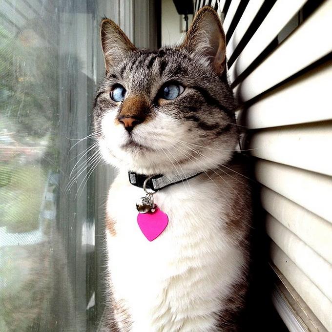 смешные коты фото 2 (680x680, 172Kb)