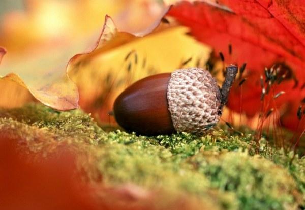 осенние листья1 (600x413, 50Kb)