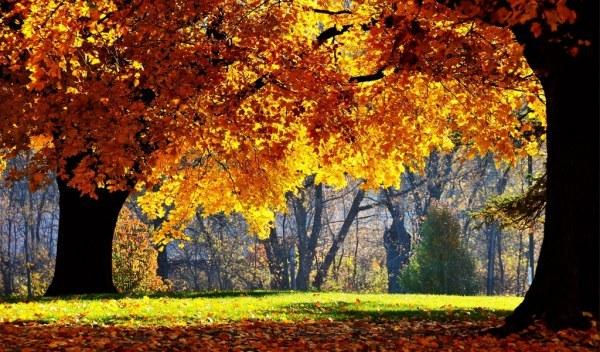 осенние листья5 (600x352, 104Kb)