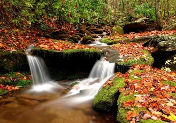 осенние листья9 (600x422, 100Kb)