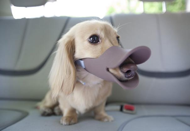 Японские намордники для собак 1348570769