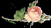 rosa png-1 (176x99, 19Kb)