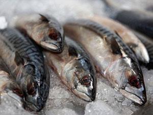 1329726604_mackerel-main (300x225, 19Kb)