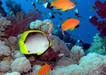 Секреты подводного мира/2741434_1 (349x248, 22Kb)