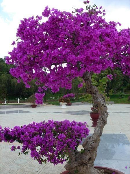 сиреневое дерево (450x600, 115Kb)