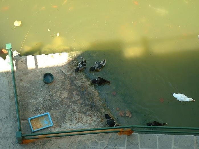 Природный парк Сан Мигель дель Фай. 30203