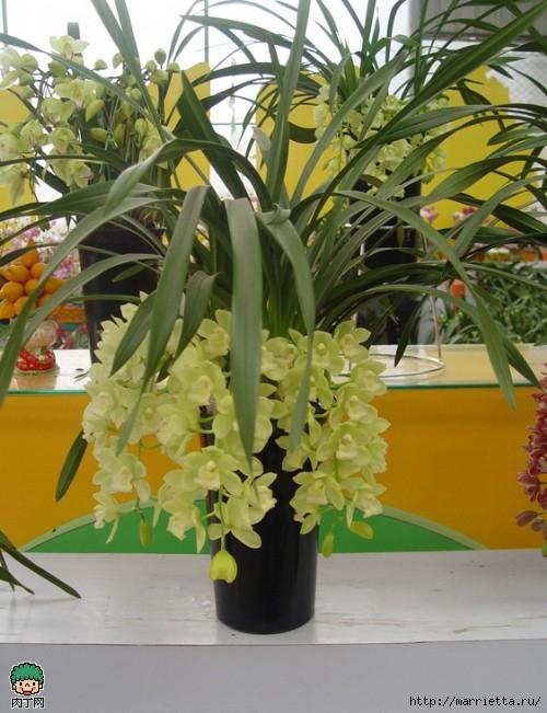 Из капрона орхидея фото мастер класс