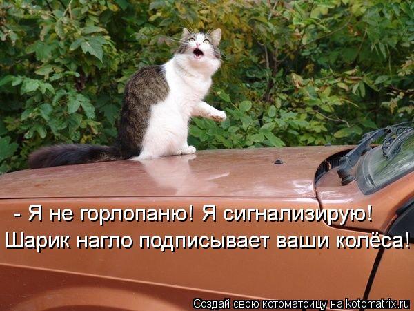 kotomatritsa_cZ (600x450, 60Kb)