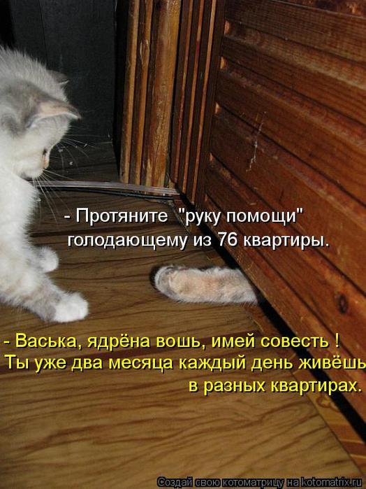kotomatritsa_F4 (524x700, 66Kb)